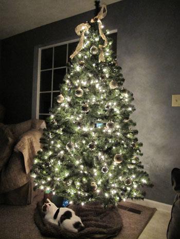 Dubie under Christmas tree