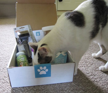 Best Friend Box for Cats