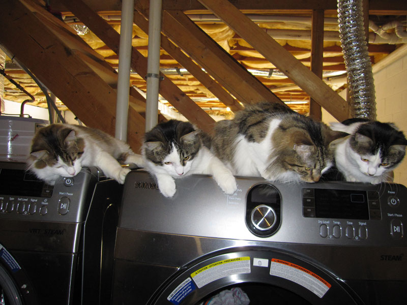Cats on Samsung Dryer