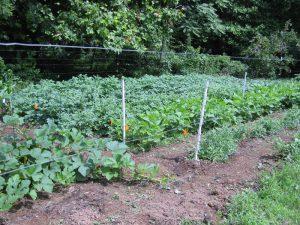 Our Virginia Garden