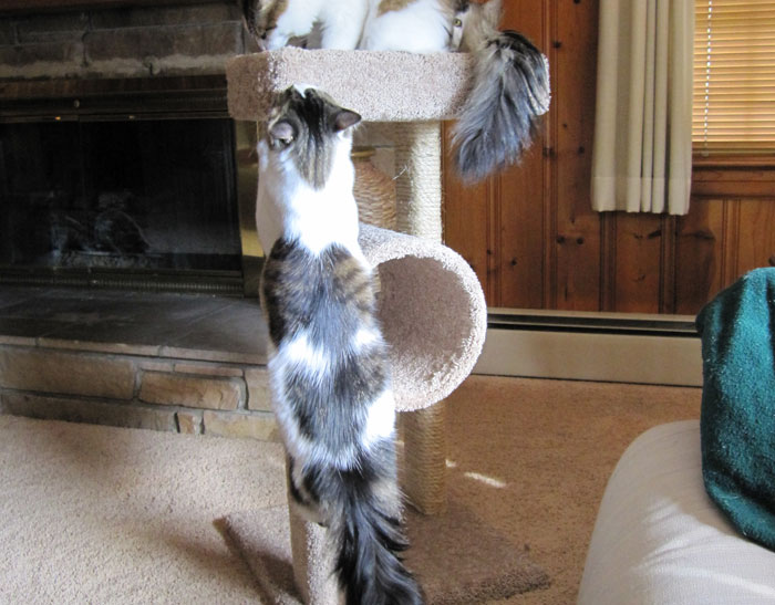 Kittens on tower