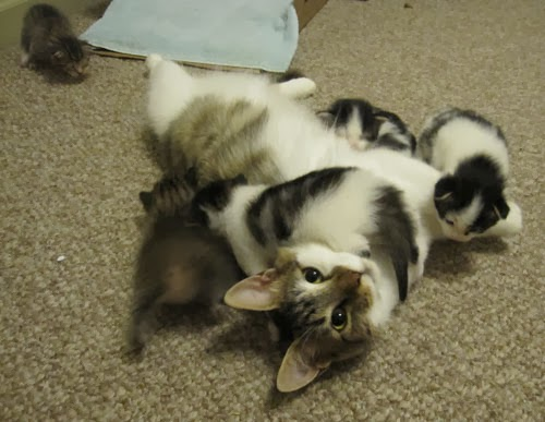 Mama Grace with Kittens