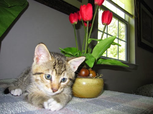 Sir Edmund with Flowers