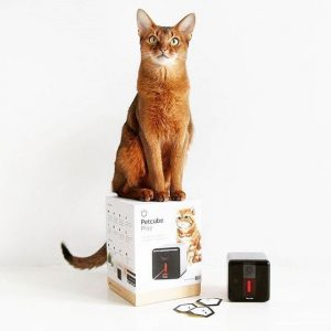 Interact with Your Pets from Work with Petcube