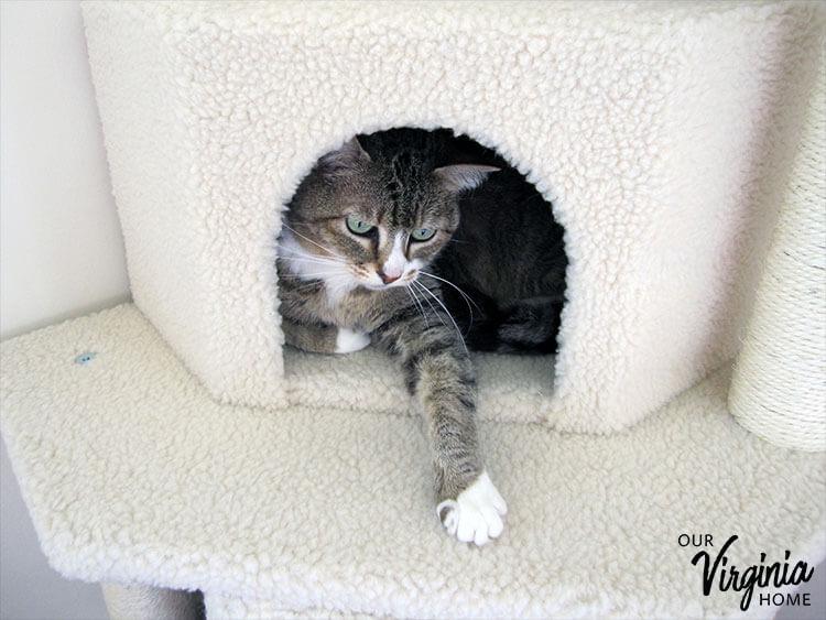 "Frisco 52"" Cat Tree Review"