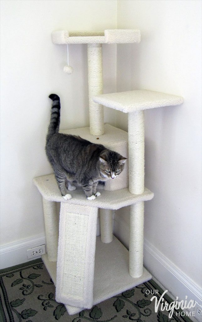 Frisco Cat Tree Review