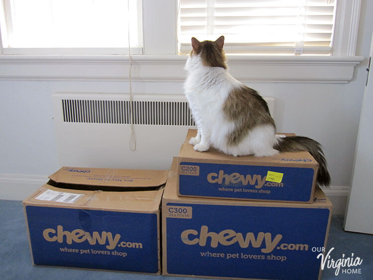 Why We Use Chewy for Our Cat Supplies