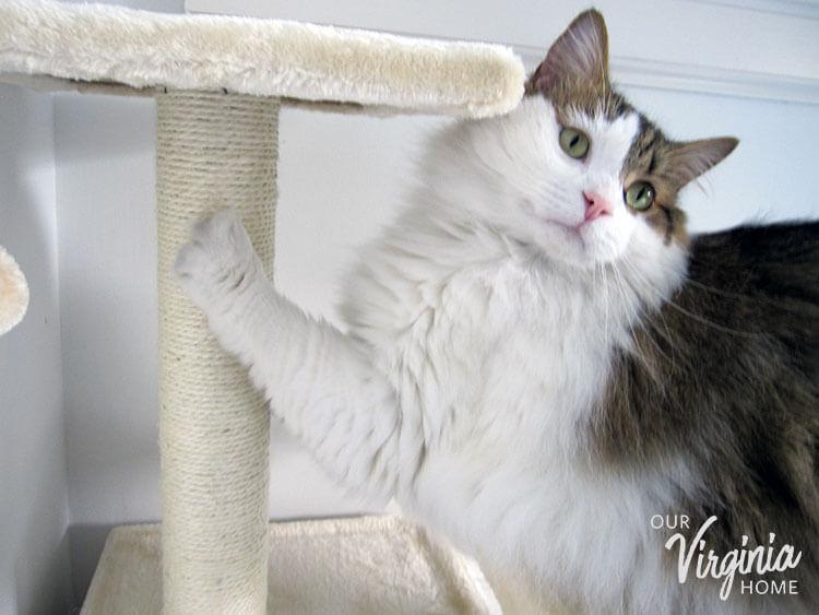 Frisco Cat Tree Review