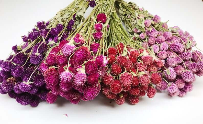 Globe Amaranth, Gomphrena, Wildflowers Floral Arrangements