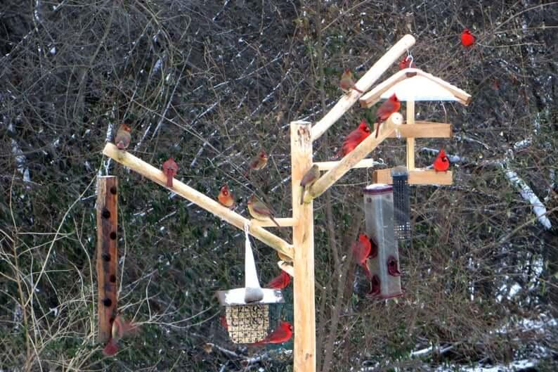 Bird feeder station | Bird feeder posts | Wood Bird Feeder Frenzy