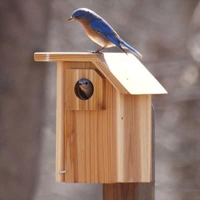Eastern Bluebird Birdhouse