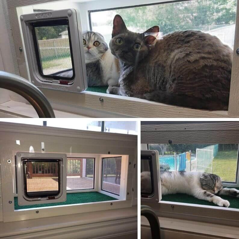Kitty Peeper cat window box