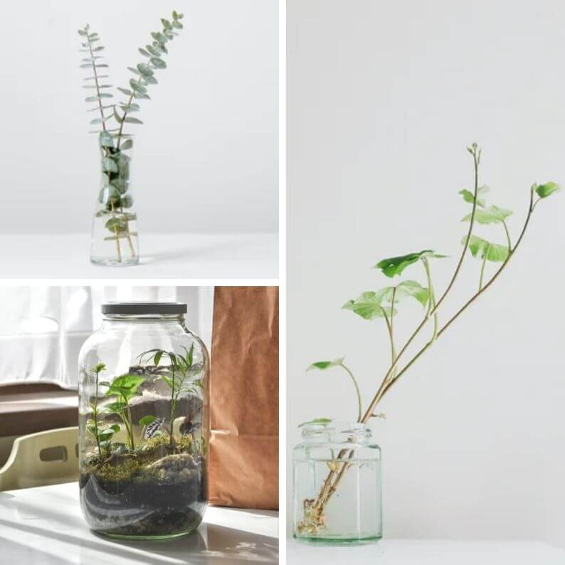 Reused glass containers